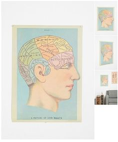 Phrenology Head Poster, $24 at Urban Outfitters