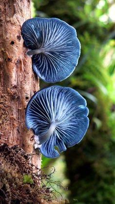 Blue Mushrooms by CandeeKayn