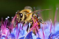 Dites à la Commission européenne de revenir sur sa décision et d'interdire ce nouveau pesticide tueur d'abeilles! | SumOfUs