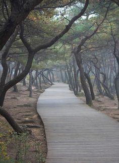 mysterious - a boardwalk in the woods