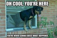Might think about installing a doggie door!