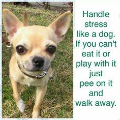 No more stress! !!
