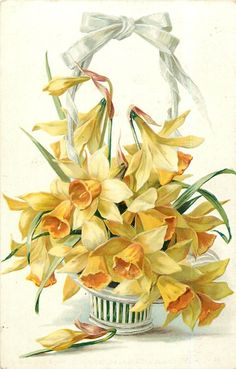 Basketful of yellow daffodills ~ 1908