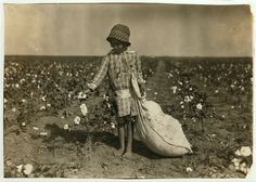 Child picking cotton in the 1930's.