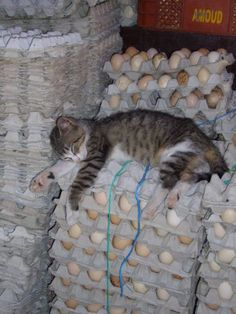 Oh boy, this kitty looks egg-hausted !