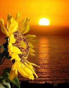 Flor de Girassol na Mitologia Grega explica o aparecimento da flor girassol. Clítia ou Clície, era uma ninfa que estava apaixonada por Hélio, o deus do Sol. Qdo este a a trocou por Leucotéia, Clície começou a enfraquecer. Ela ficava sentada no chão frio, sem comer e sem beber, se alimentando apenas das suas próprias lágrimasEnquanto o Sol estava no céu, Clície não desviava dele o seu olhar nem por um segundo, mas durante a noite, o seu rosto se virava para o chão, continuando então a chorar.