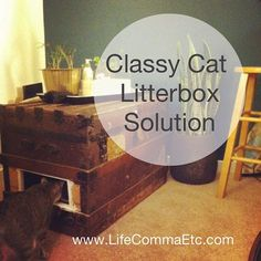 Cat Litter Box Ideas: Our Classy Steamer Trunk Solution! - Life [Comma] Etc
