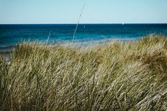 Lake Michigan  free high-resolution photo about Landscape background beach beautiful blue Coastal Dune grass great lake Lakes Michigan nature sand Sandy scenery sea Seashore shore sky summer sunset tourism travel vacation water