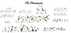 Every pterosaur ever discovered: 15 families, 186 genera