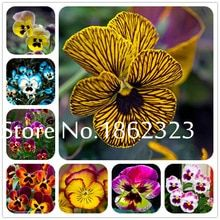 Free shipping on Garden Supplies in Home & Garden and more on AliExpress - Page 6 Bonsai Maple Tree, Bonsai Ficus, Bonsai Plants, Sago Palm Tree, Palm Tree Plant, Trees To Plant, Narcissus Flower, Daffodil Flower, Planting Sunflowers