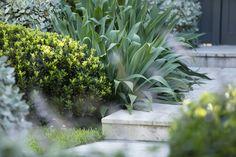 Beshorneria and silver and green mounded shrubs along the path Australian Native Garden, Coastal Gardens, Home Garden Design, Mediterranean Garden, Home Landscaping, Contemporary Garden, Rooftop Garden, Plant Design, Dream Garden