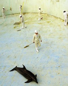 Heartbreaking Images of Dolphins in Drained Aquariums the Result of 'Routine' Practice, Says Ric O'Barry. The cruel and unusual cleaning method occurs at all '51 dolphin abusement parks in Japan,' says 'The Cove' star.