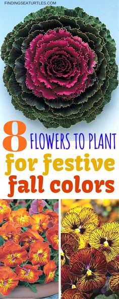 8 Fantastic Fall Annuals to Plant this Fall - Finding Sea Turtles 8 Fantastic Annuals to Plant this Fall Potted Plants, Outdoor Plants, Plants For Fall, Ivy Plants, Outdoor Decor, Winter Planter, Fall Planters, Garden Planters, Indoor Garden