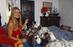Rendezvous With Brigitte Bardot On Holiday In SaintTropez Brigitte BARDOT dans son lit chez elle à SaintTropez entourée de ses chiens et ses chats...