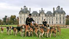 Loire Valley France, English Foxhound, Central Building, Dog Crossbreeds, Cheverny, Man And Dog, The Fox And The Hound, Luxury Interior, 17th Century