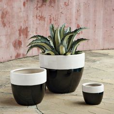 black and white indoor planters - west elm