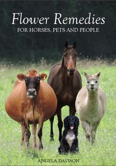 Flower Remedies for Horses, Pets & People by Angela Davison
