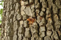 Tree Frog Geocache