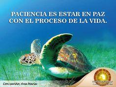#FraseAnaMaría: Paciencia es estar en PAZ con el proceso de la VIDA. Seamos pacientes que todo llega en el momento indicado.