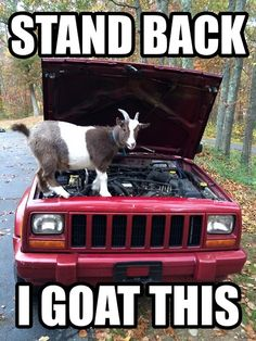 In case your goat can't handle it, give us a call: 925-435-1702 or visit us: http://www.dandhautorepair.com/contact-us/ #auto #funny