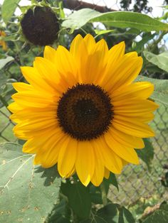 Trendy Ideas for vintage nature photography flowers bouquets Vintage Nature Photography, Nature Photography Flowers, Sunflowers And Daisies, Sun Flowers, Sunflower Patch, Sunflower Pictures, Painting Competition, Sunflower Wallpaper, Plants Are Friends
