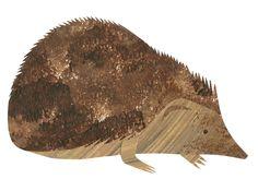 Hedgehog. Stacey Knights Illustration