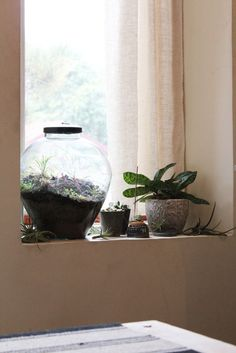 plant window!