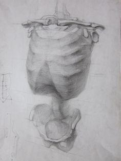 Учебный рисунок: Анатомические рисунки
