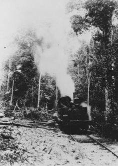 Locomotive used to pull logs on Fraser Island. This was owned and operated by Wilson, Hart, Hyne and Company.  C 1905