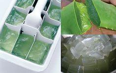 Congelar Aloe Vera em bandejas de cubo de gelo para alívio de queimaduras solares e outras irritações cutâneas. (Algumas espécies de babosa são comestíveis e podem ser usadas em bebidas.)