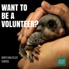 Volunteering In Australia: What You Need To Know