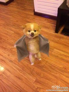 Viral de la semana: el perro que se rebeló contra su corte de pelo A Jin Dan no le gustó nada su nuevo corte de pelo