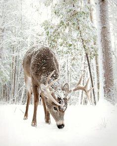 *LET IT SNOW