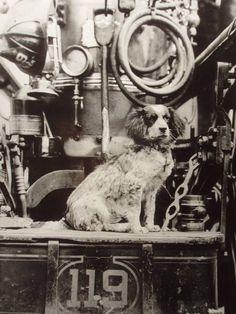 fire dog circa 1890