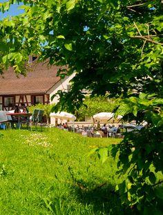 Tobelhof Business Events, Alter, Dolores Park, Restaurants, Travel, Economics, Viajes, Restaurant, Trips