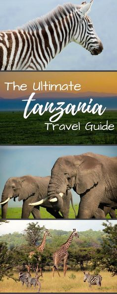 The ultimate Tanzania travel guide! Including where to go on safari (Serengeti, Ruaha, Selous, Ngorongoro Crater) or where to go to the beach! Zanzibar, Stone Town, Kilimanjaro and all the things to do in between. There are even a few honeymoon ideas here!