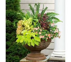 Shade Planter (two out in front of main door)