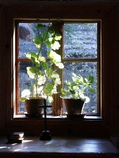 Love plants and flowers by windows that catch the light.