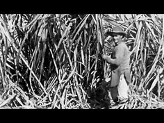 How We Get Sugar circa 1920 Prelinger Archives: http://youtu.be/90x7fu3enaM #sugar #agriculture #1920s