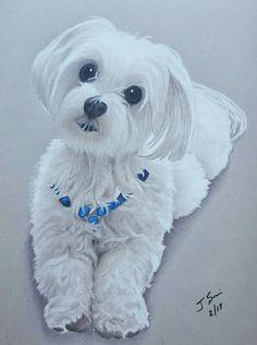 Scooter drawing portrait Maltese dog pet prismacolor colored pencils art tribute