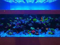 Check out what clients think about the Orphek Atlantik Gen 2 reef aquarium LED lighting at BRS shop Aquarium Led, Led Aquarium Lighting, Marine Aquarium, Reef Aquarium, Lights, Lighting, Rope Lighting, Candles, Lanterns