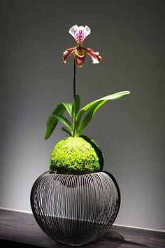 ランの苔玉。粋でおしゃれな台にのせると、一気に雰囲気が出ます。センスが感じられる素敵なあしらいですね。