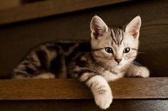 Stairs Brown Tabby Kitten