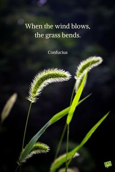 Confucius quotes When the wind blows,the grass bends. Zen Quotes, Best Inspirational Quotes, Nature Quotes, Spiritual Quotes, Wisdom Quotes, Lesson Quotes, Awesome Quotes, Confucius Say, Confucius Quotes