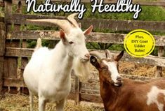 Guide to Keeping Goats Naturally Healthy Flip Book - Backyard Goats Keeping Goats, Raising Goats, Goat Hoof Trimming, Types Of Goats, Goat Playground, Goat Shelter, Nigerian Dwarf Goats, Goat Farming, Baby Goats