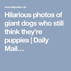 Hilarious photos of giant dogs who still think they're puppies | Daily Mail…