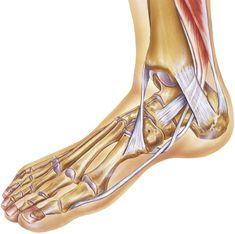 De finurlige fødder Senior Fitness, Yoga Fitness, Health Fitness, Fitness Diet, Ballet Shoes, Dance Shoes, Bra Hacks, Knee Pain, Facon