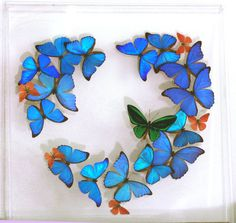 Romantic butterfly display. Does she already have everything?  This romantic display is just what you are looking for to rekindle the love! The display measures two feet squared.