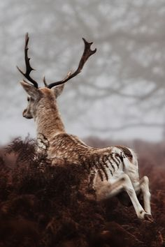 … this makes me think of Narnia - when the Pevensie were hunting a white stag and rediscovered the wardrobe.