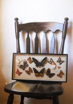Vintage Collectible Butterfly Collection/ Colourful/ Rare/ Asia/ Forest/ Insect/ Giant. $285.00, via Etsy.